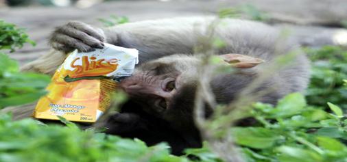 Mango juice......... -Excelsior/Rakesh