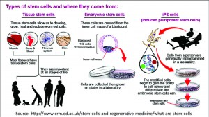 the importance of stem cell research The stem cell controversy is the consideration of the ethics stem cells have played an important role in stem cell research is highly frowned upon in.