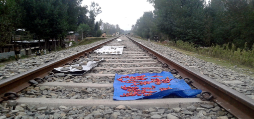 People dry red chillies on railway track at Chidhama, Anantnag as there was no rail traffic due to ongoing unrest in the Valley on Wednesday.-Excelsior/Sajad Dar