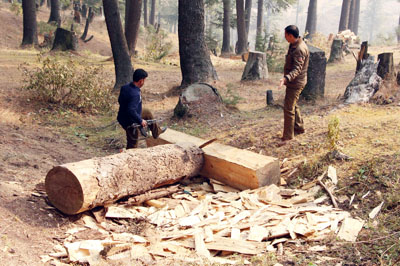 Timber being seized by Rafiabad Police.