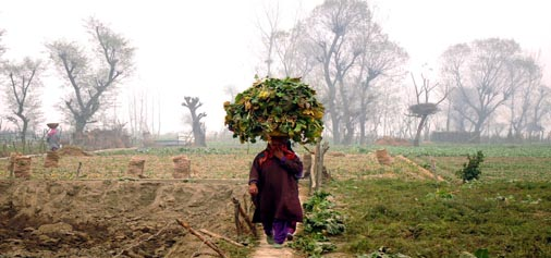 A woman carrying green leaves on her head passes through a field on Srinagar outskirts amid fog. -Excelsior/ Shakeel