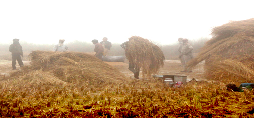 Workers in a field on a foggy morning in Jammu on Tuesday. -Excelsior/Rakesh
