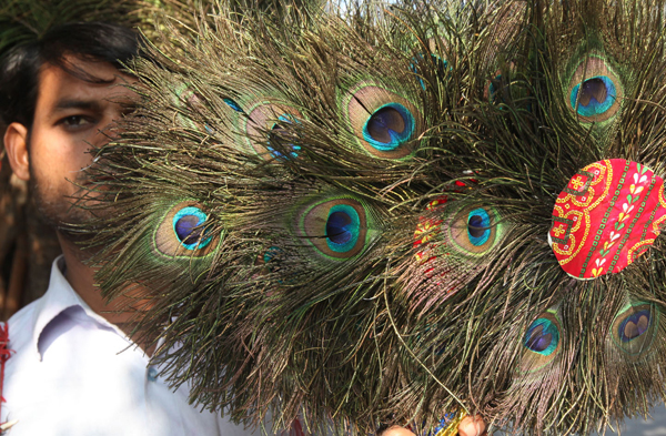 A boy selling peacock feathers in Jammu. —Excelsior/Rakesh