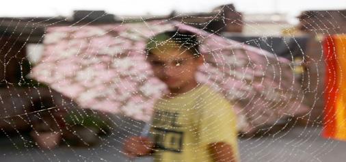 Rain drops on spider's web. -Excelsior/Rakesh