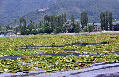 A view of polluted Dal Lake.