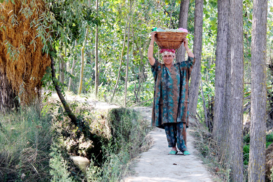 A traditionally attired Kashmiri woman carrying meals in a basket for her family members busy in cultivating paddy in the fields in Central Kashmir on Wednesday. (UNI)
