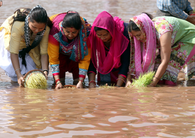 Devotees immersing Saakh in River Tawi at Jammu on Friday. — Excelsior/Rakesh