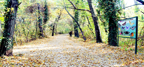 Leaves from trees represent loveliest smile of the autumn in Kashmir valley on Saturday. (UNI)