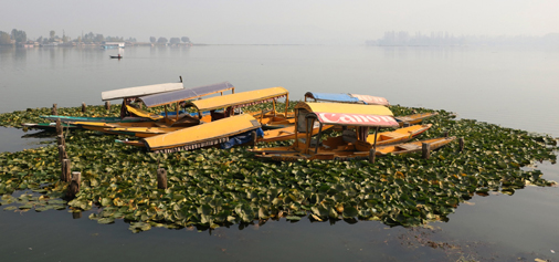 Shikara boats moored in the middle of Dal lake in Srinagar. —Excelsior/Shakeel