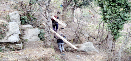 Green trees are being cut in the forests of far flung area of Sub Division, Mahore. —Excelsior/Karan Deep Singh