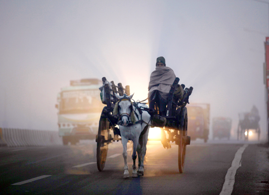 Braving thick fog and harsh cold, a horse-cart driver moves on a road in Jammu on Friday morning.  	-Excelsior/Rakesh