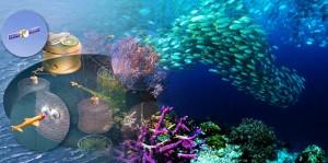 Career in Fisheries, Aquaculture