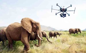 Drones monitor wildlife better than humans: study