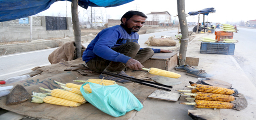 A man roast corn cobs as he waits for customers at Narbal on the outskirts of Srinagar. -Excelsior/Shakeel