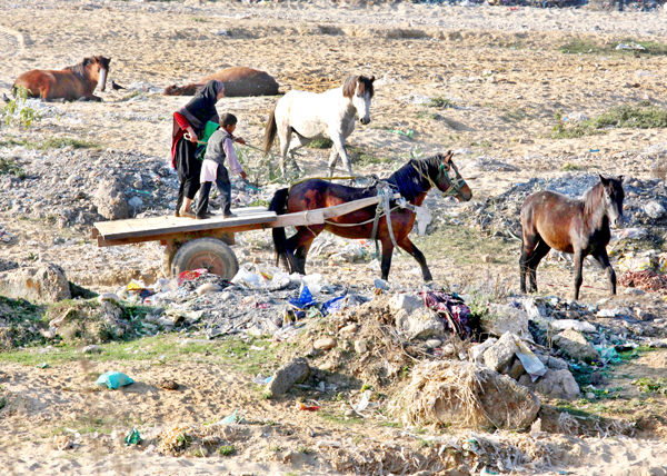 A woman riding a horse cart passes through a dumping area on the outskirts of Jammu. -Excelsior/Rakesh