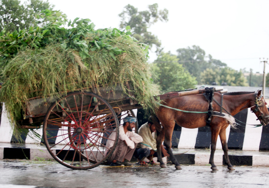 Cart pullers take shelter from rain in Jammu on Saturday. —Excelsior/Rakesh