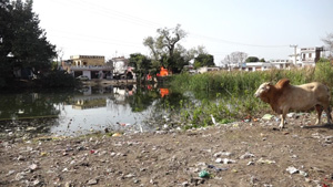 A pond full with filth near Muthi.