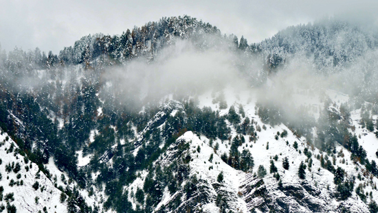 Upper reaches of Kashmir received fresh snowfall on Thursday. -Excelsior/Shakeel