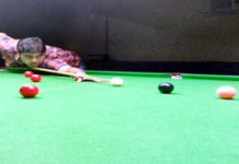 Cueist in action at Billiards Hall, MA Stadium in Jammu.