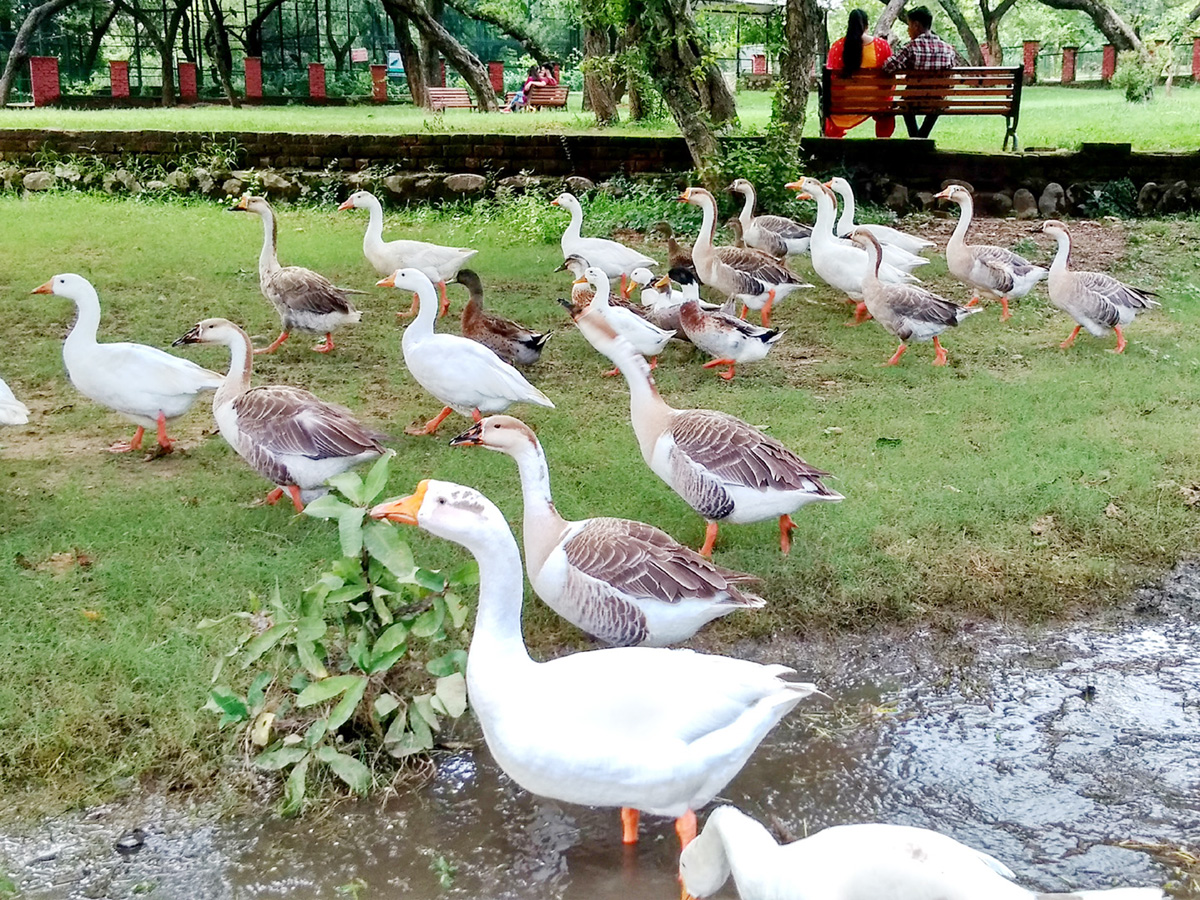 Ducks enjoy in Manda Zoo on a bright sunny day on Monday.