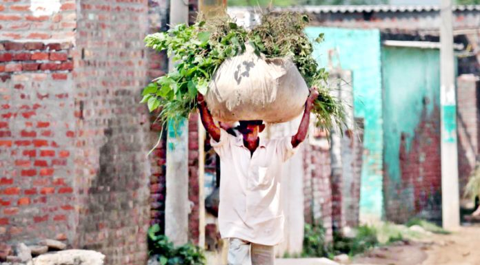 On way home with fodder... -Excelsior/Rakesh