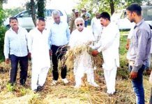 A farmer showing his damaged paddy crop to senior NC leader, Ajay Sadhotra at a village of Tehsil Mandal in Jammu district.