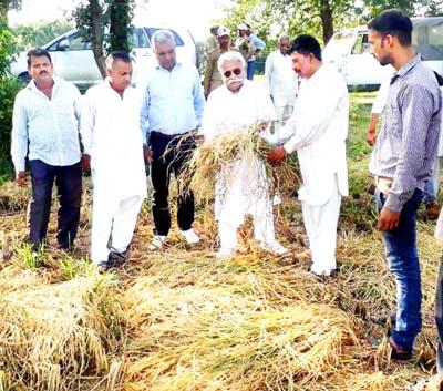 A farmer showing his damaged paddy crop to senior NC leader, Ajay Sadhotra at a village of Tehsil Mandal in Jammu district.