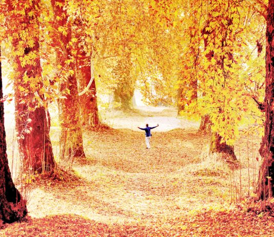 Nishat garden presents a stunning view during autumn in Kashmir. —Excelsior/Shakeel