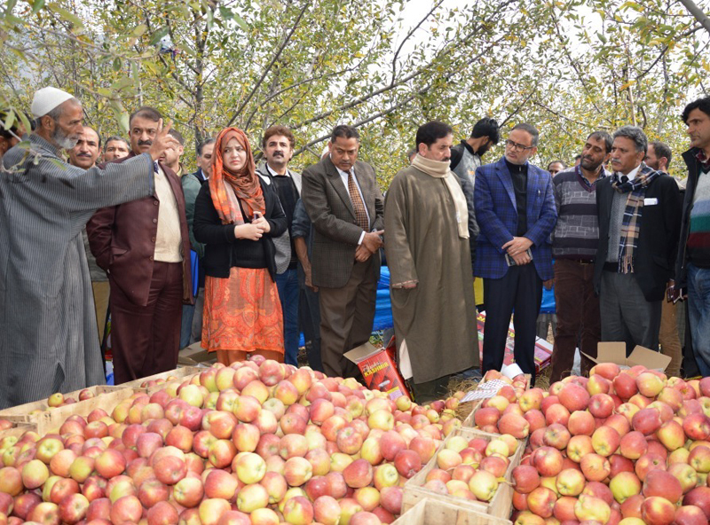 Advisor Khurshid Ganai inspecting damages to orchards on Thursday.