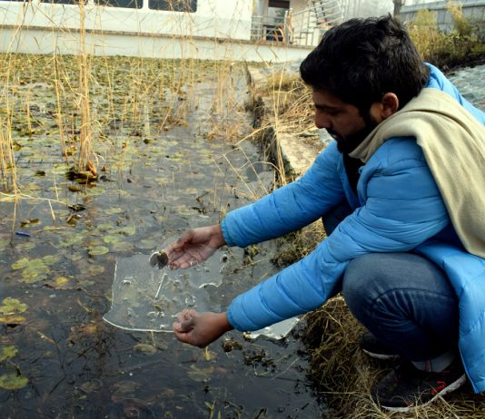 A man shows a piece of frozen ice at Dal lake in Srinagar on Tuesday. -Excelsior/Shakeel