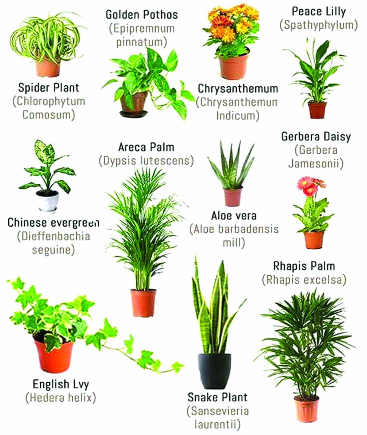 As And When There Is Smog Issue Severe Air Pollution People Start Remembering Purifiers Plants Or Other Mechanical