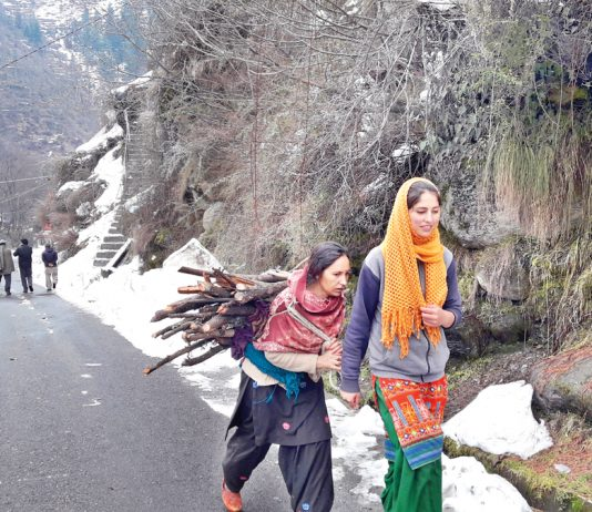 A woman carrying firewood in Bhaderwah. —Excelsior/Tilak Raj