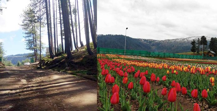 A view of pathetic road leading towards Sanasar hill station and a Tulip Garden in full bloom in Ramban district. (UNI)