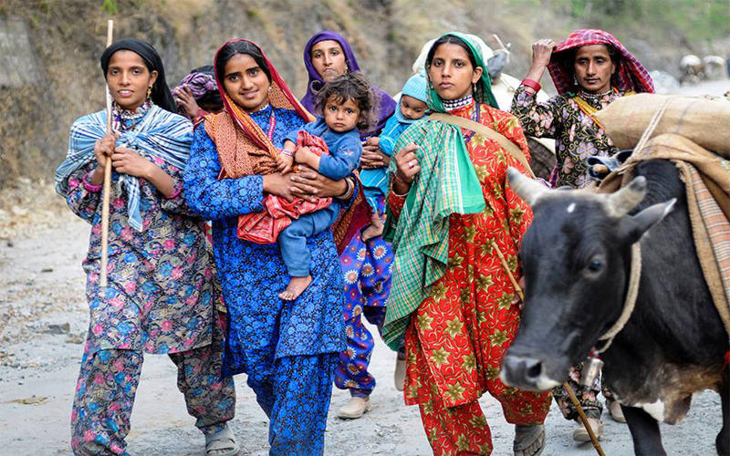 Tribal Gujjar women moving alongwith their cattle and kids.