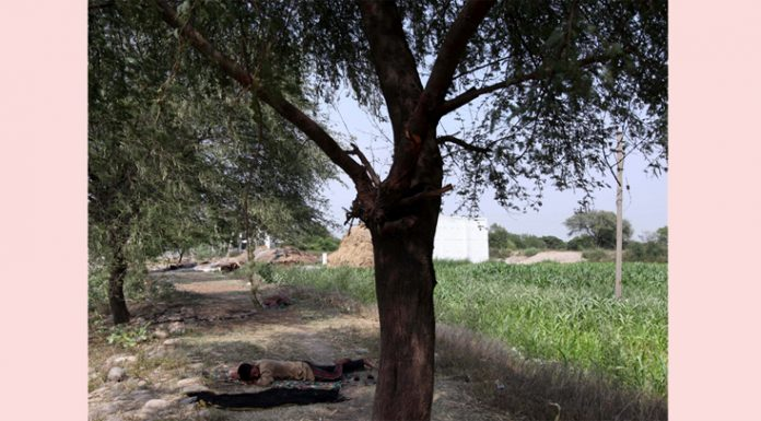 Farmer takes rest under the shadow of a tree after day's work on the outskirts of Jammu. —Excelsior/Rakesh
