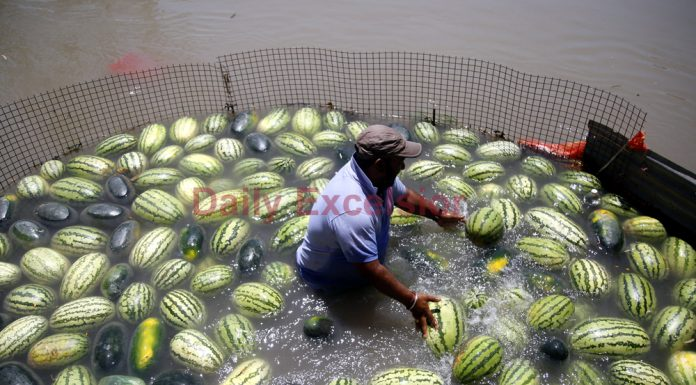 Vendor cools himself and his watermelons at a canal as he waits for customers on a hot afternoon in Jammu on Monday. —Excelsior/Rakesh