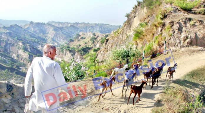 Heading for grazing. -Excelsior/Rakesh