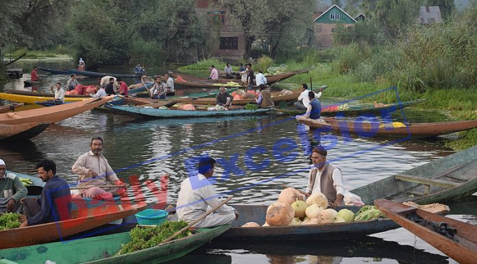 Vendors gather with their boats laden with vegetables at the floating market on the interiors of Dal lake in Srinagar. —Excelsior/Shakeel