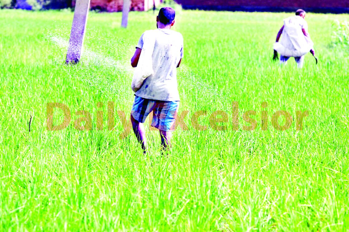Farmers work in their field on the outskirts of Jammu. —Excelsior/Rakesh