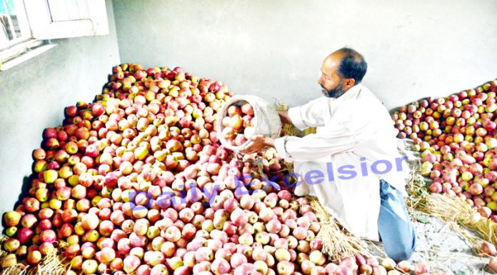 11,000 trucks carried apples from Kashmir to outside-Excelsior/Shakeel