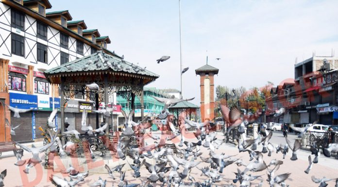 Pigeons fly as security personnel stand guard in Srinagar. -Excelsior/Shakeel