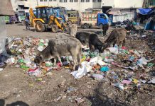 Garbage lying here & there at Reasi Bus Stand.