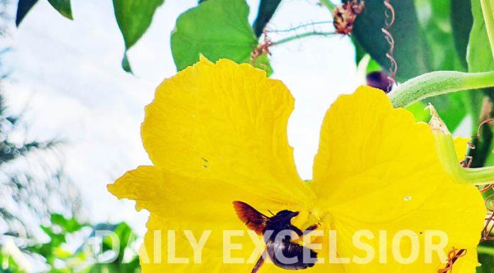 Enjoying the nectar. — Excelsior/Rakesh