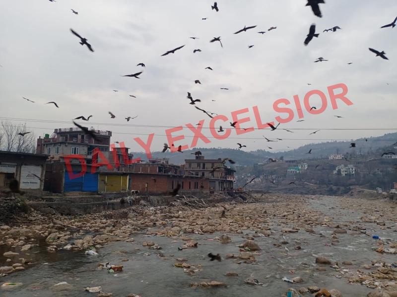 Birds flying over river Mendhar. -Excelsior/Rahi Kapoor