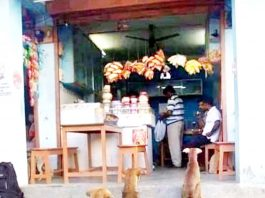 Stray dogs awaiting for food outside a shop.