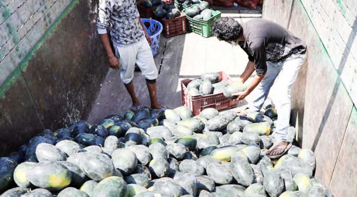 Watermelons being unloaded at Narwal Fruit Mandi in Jammu on Friday. -Excelsior/Rakesh