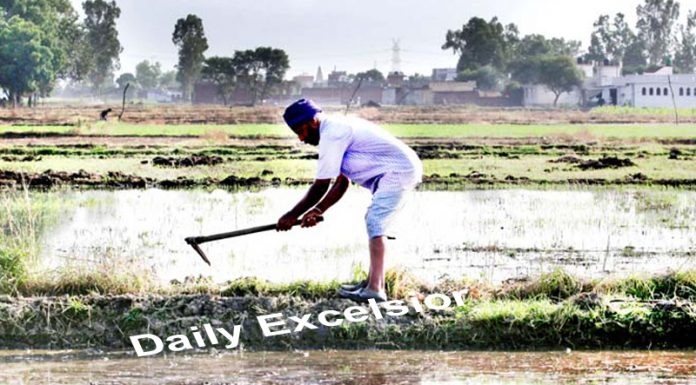 Farmer works in his field on the outskirts of Jammu.-Excelsior/Rakesh