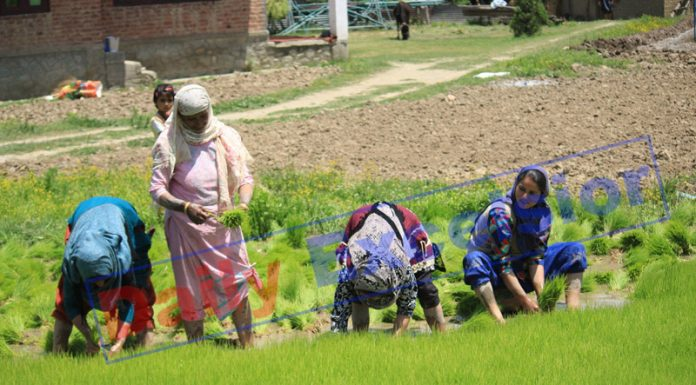 Farmers work in their field at village Krishama in Baramulla district on Monday. -Excelsior/Aabid Nabi