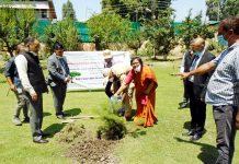 Chief Justice planting sapling.