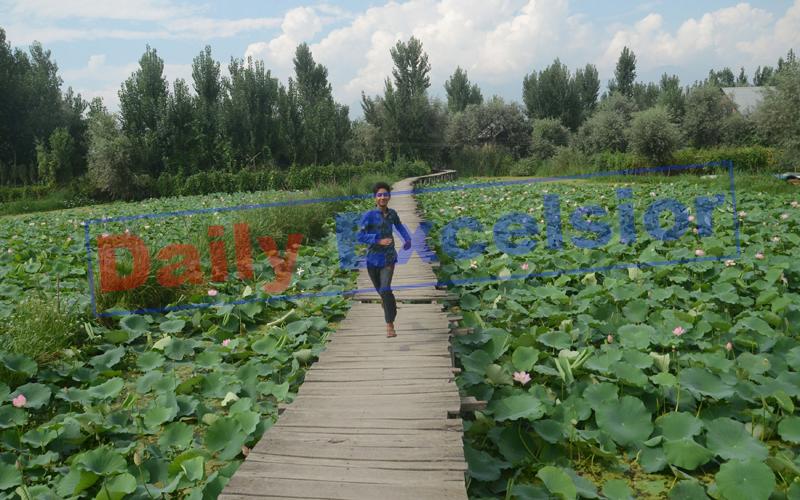 A boy runs on wooden bridge near lotus garden in the interiors of Dal lake in Srinagar. — Excelsior/Shakeel